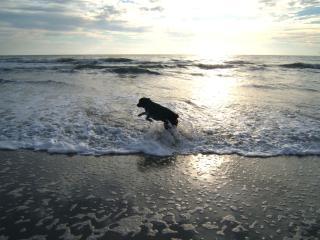 I SURF TOO!