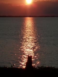 Gizmo Watching Sunset