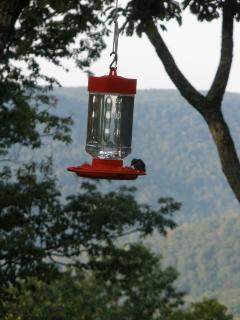 The hummingbird highway!