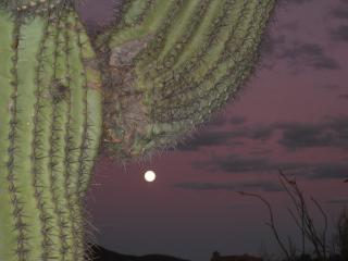 Evening in the Sonoran Desert Overlooking the Pool