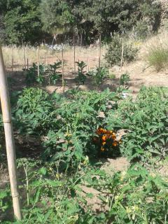 the organic vegetable garden