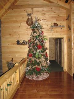 Oh Christmas Tree, Oh Christmas tree Over 12 ft high and ready for presents...