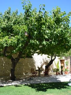 Enjoy the shade offered by the cherry trees.