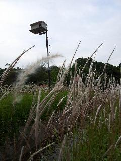 Bird house at paddy field