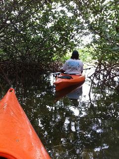 Kayaking through the mangroves