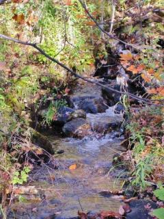Walk down by the creek to listen to the gentle sound of running water.