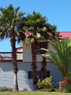 Gorgeous mature palms!