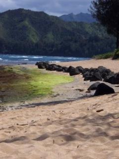 A Beautiful Kauai Beach
