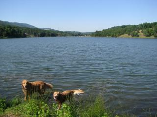 Private/Romantic Pet Friendly Cabin WV- Owl's Nest, Petersburg