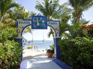Blue Tang Inn San Pedro, Belize