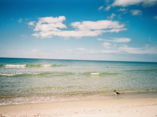 99 Nov-Dec SpecialCape San Blas pet-friendly beach, Port Saint Joe