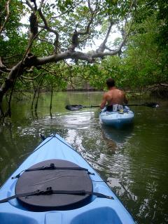 Kayaking Through a Mangrove Tunnel
