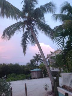 palms on North Captiva Island