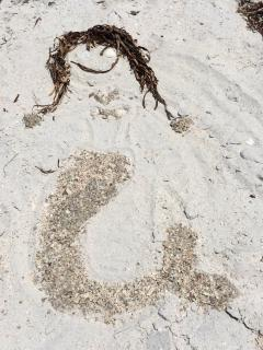 mermaid of shells and seagrass on the beach