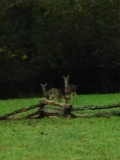 It isn\'t unusual to see deer on the property in the fall.