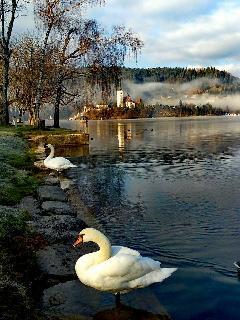 Bled Lake imago paradisi