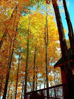 The hardwoods are gorgeous during our fall color season.