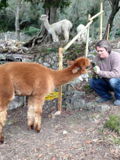 Relax with the alpacas.