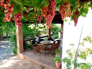 Have a truly Mediterranean dining experience under our hanging vines full of grapes in summer!
