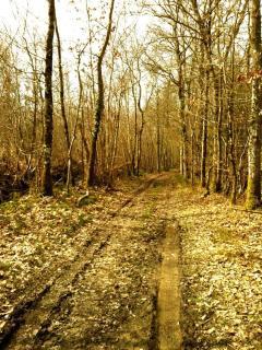 Forest walk!