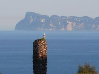 Even the birds stop to look at the beautiful view of Capri