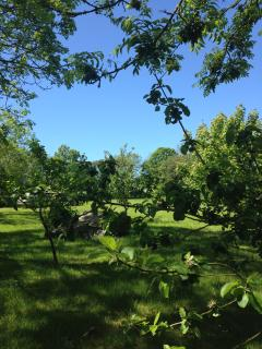 View to top lawn with lovely mature trees for plenty of shady seating