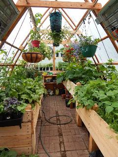 The interior of the greenhouse during the growing season. Guests are welcome to share in the harvest