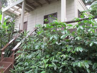 Secluded Tropical Honemoon Hideaway at South Kona Coffee..