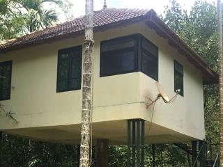 Kerala pleasing alluring 1 Wayanad 1 bed cottage, Kalpetta