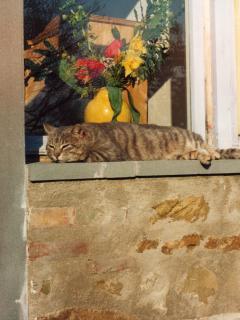 Villa La Rogaia apartment La Grapo - cat taking a sunbath on the window sill