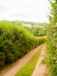 The narrow lane coming into the farm.... nearly at an idyllic retreat.