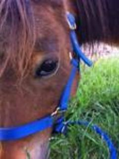 Cici is our miniature pony