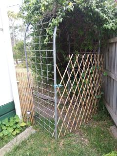 showing back entrance to yard , I have more trelise pieces to block up if need re pets