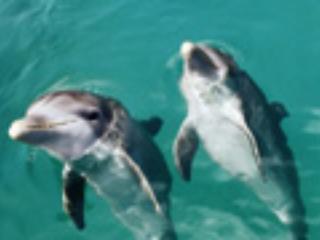 Experiencia con delfines