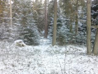 Агроусадьба Беловежская лесная сказка