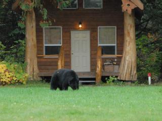 Bear grazing outside of cabin.
