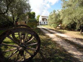 Casa vacanza: Sotto i pini: l'ulivo
