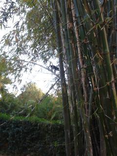 les singes ne sont jamais bien loin !