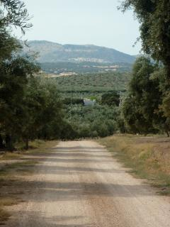 La Coqueta sits snugly within the olive groves.