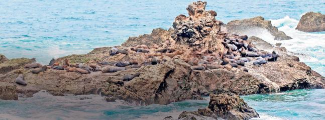Lyons sea at La Loberia