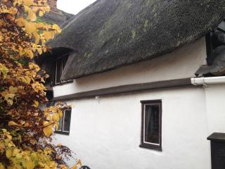 Thatched roof of the property.