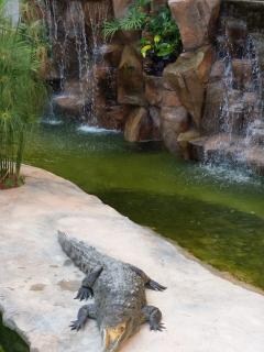Meet Paco and Lola in the private crocodile pool
