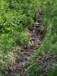 Running creeks throughout the property