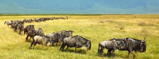 safari in maasai mara organised by Destiny eco camp mara