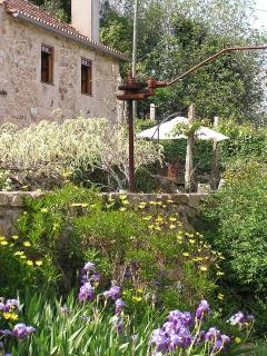 Yavanna - Old Wine Press in our garden