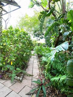 THE GARDEN IS YOUR TROPICAL JUNGLE!