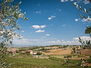 Cetine Vecchie - Lily, Torrita di Siena