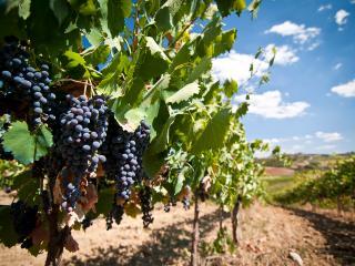 Cetine Vecchie - Winery