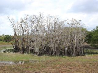 Spiritual Retreat Cenote Cabanas near Cancun Mex, Coba
