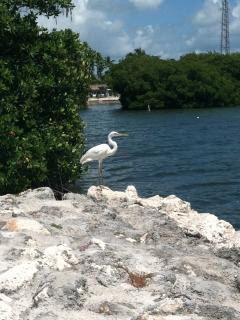 Bird watching on the Jetty